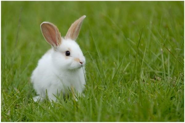 Здоровый кролик в траве