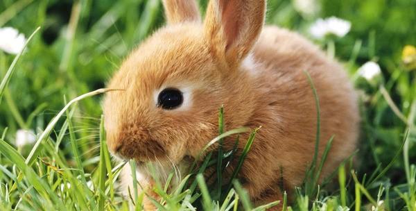 Крольчонок в траве