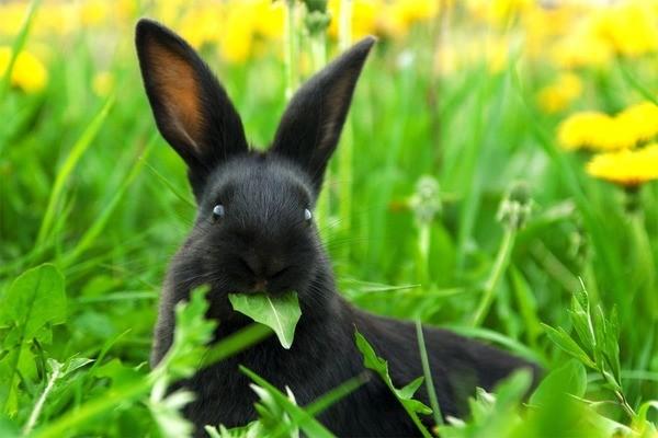 Крольчонок кушает зелень