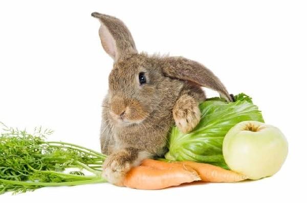 Кролик и его пища