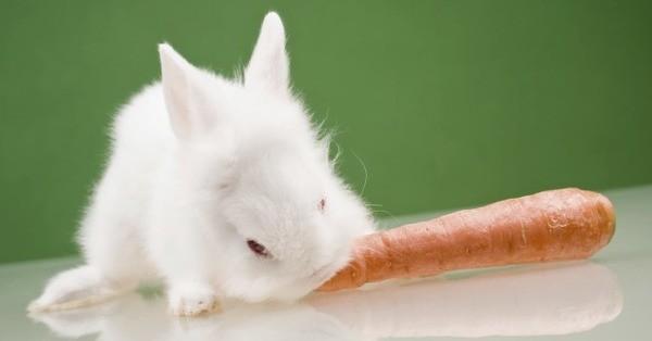 Крольчонок и морковка