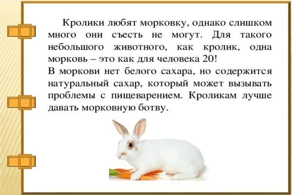 Интересный факт о пользе моркови для кроличьего организма