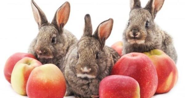 Яблоки для кроликов