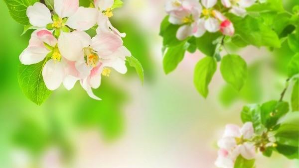 Ветви расцветают
