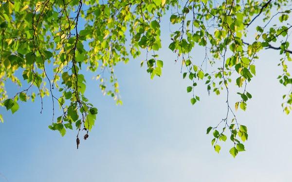 Ветка на дереве