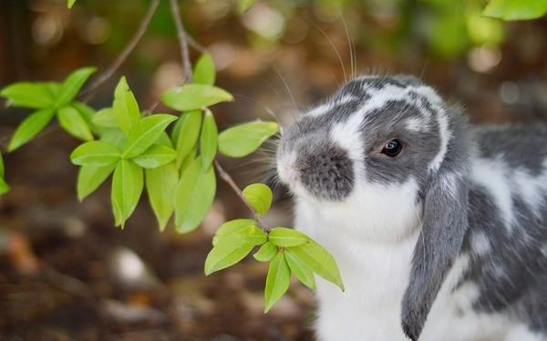Кролик кушает ветву с дерева