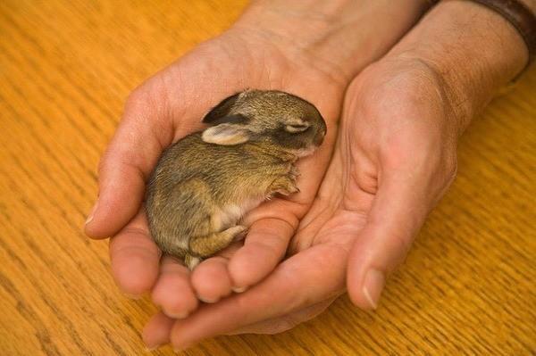 Если кролик не растет