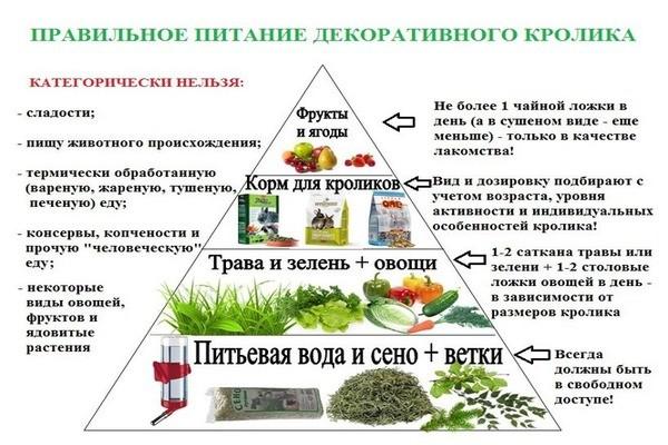 Правильное питание декоративного кролика