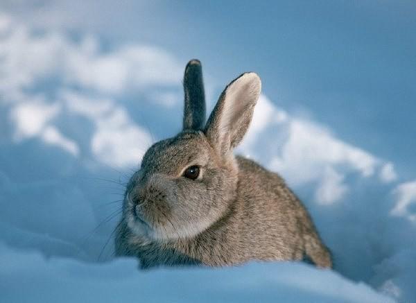 Зверь в снегу