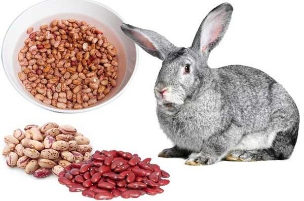 Кролик и разные сорта гороха