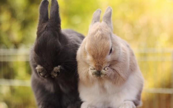 Инфекция у кроликов