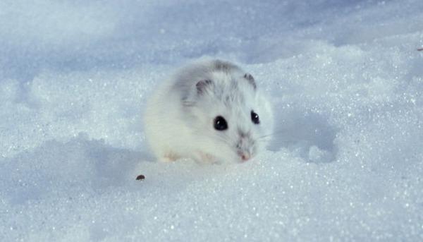 Зверек в снегу