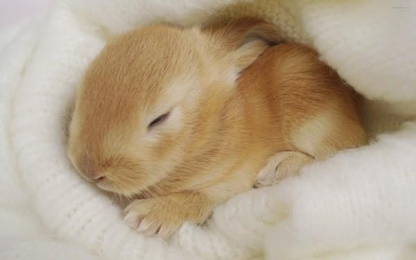 Маленький крольчонок спит