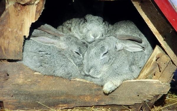 Кролики спят в гнезде