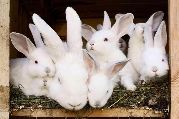 Крольчиха с детьми