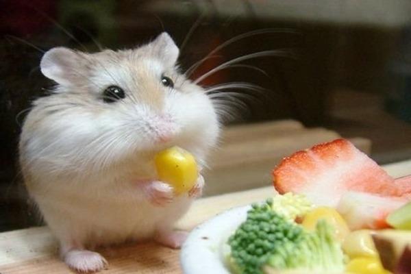 Питомец кушает