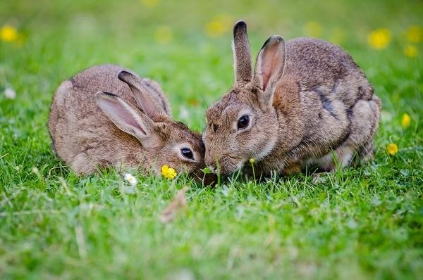 Здоровые кролики