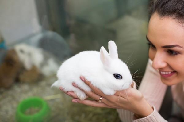 Белоснежный крольчонок