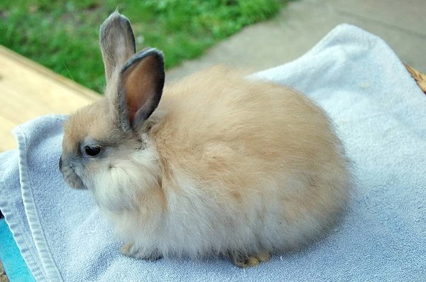 Маленький крольчонок