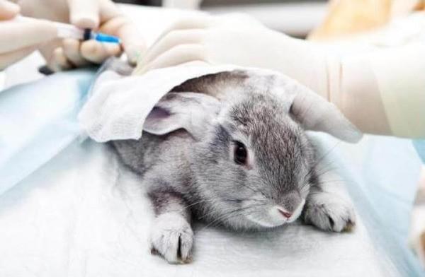 Лечение в ветеринарной клинике