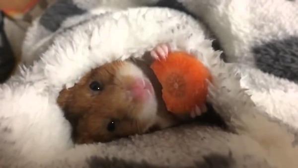 Как правильно вводить в рацион морковь