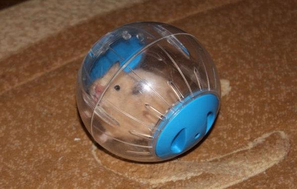 Хомячок внутри шарика