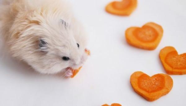 Морковь для джунгарских и сирийских хомячков