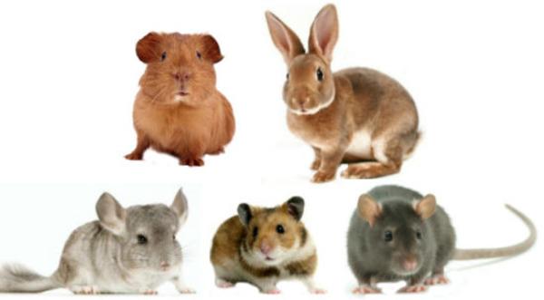 Животные в сравнении