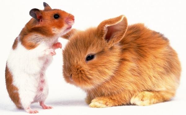 Хомячок и крольчонок