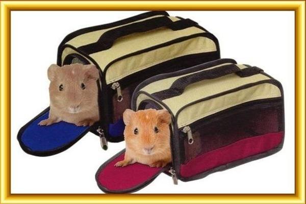 Питомец в сумке