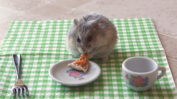 Джунгарик кушает пиццу