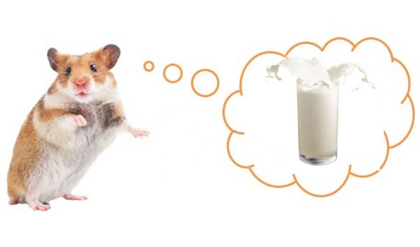 Хомяк и молоко