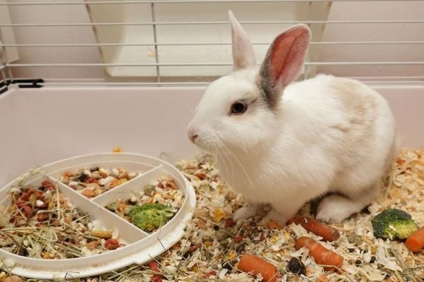 Крольчонок в клетке возле кормушки