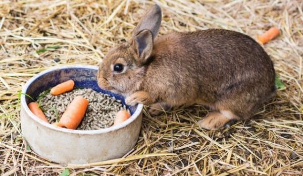 Неправильное кормление кролика