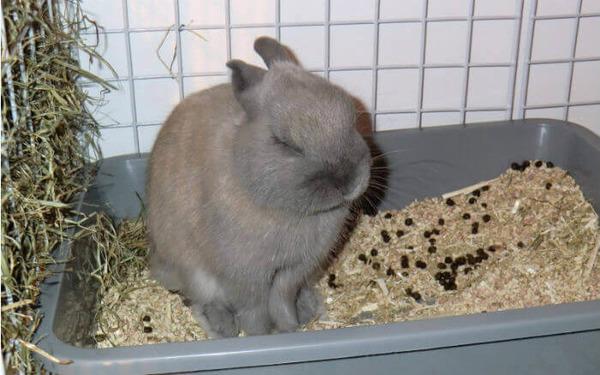 Кролику тяжело какать