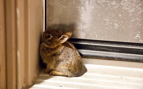 Запор у крольчонка