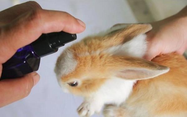 Обработка крольчонка
