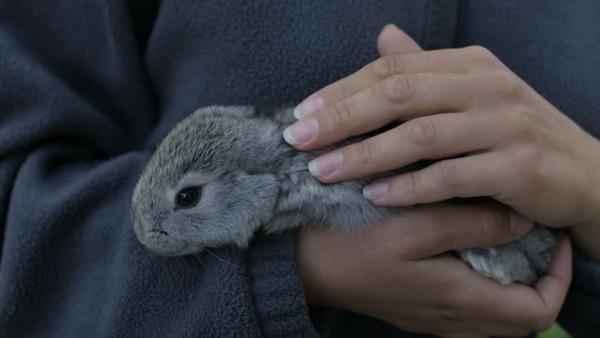 Крольчонок на руках