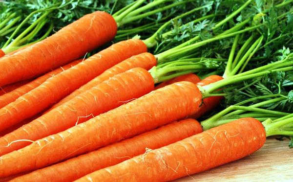 Морковка дл кроликов