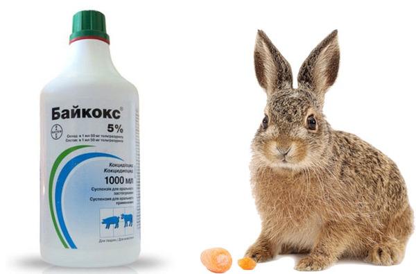 Крольчонок и Байкокс 5%