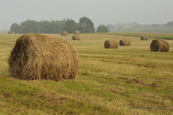 Луговое сено