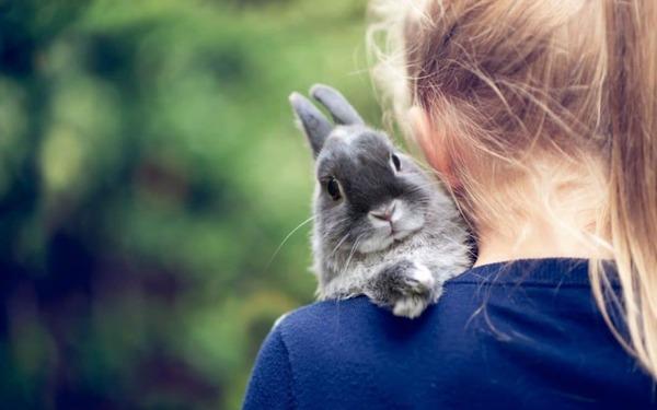 Ребенок держит кролика возле шеи