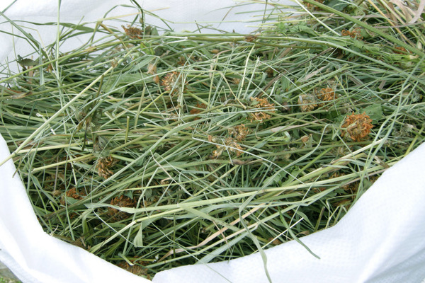Сушеная трава