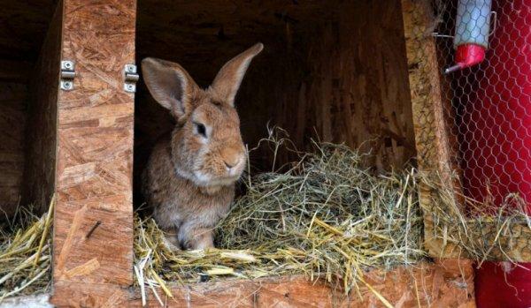 Подстилка в клетке у кроля