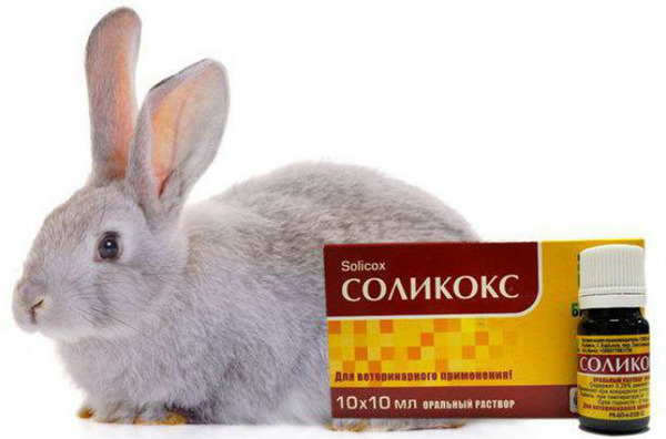 Соликокс для кролика