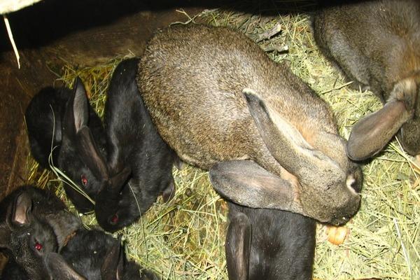 Убежище кроликов