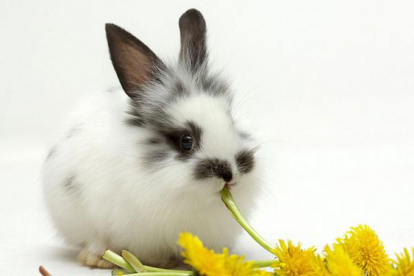 Крольчонок ест кульбабу