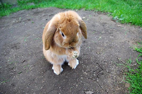Кролик плачет