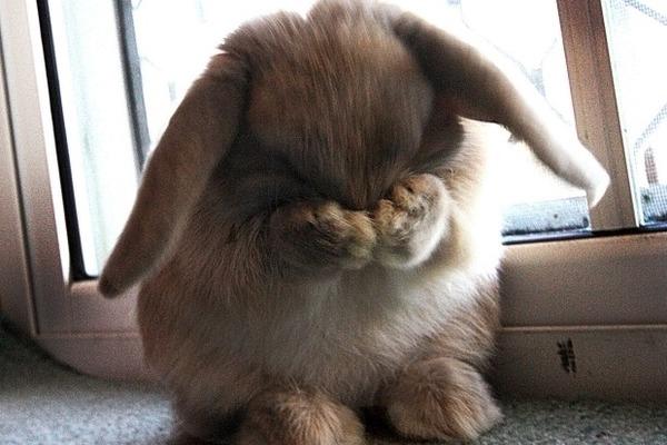 Плачущий кролик