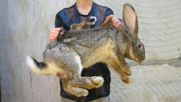 Вот так нужно брать кроликов